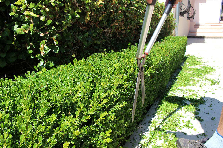 Entretien de Jardins Cannes Mandelieu La Napoule